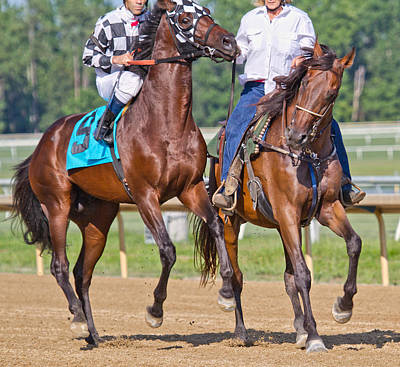 Blood Bay Horse Photograph - Ready To Run by Betsy Knapp