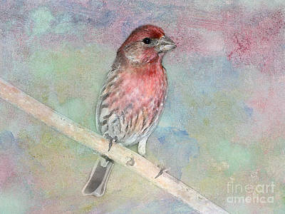 Finch Digital Art - Ready To Sing My Song by Betty LaRue