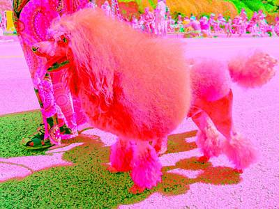 Really Pink Poodle Art Print by Randall Weidner