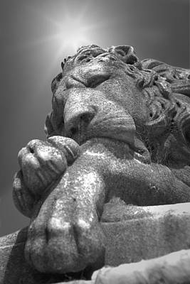 Photograph - Recoleta Lion by Michael Yeager