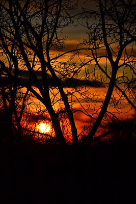 Photograph - Red And Gold 02 by Bonnie Myszka