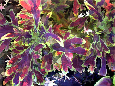 Red And Green Coleus Art Print