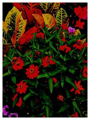 Photograph - Red And Green Galore by Frank Wickham