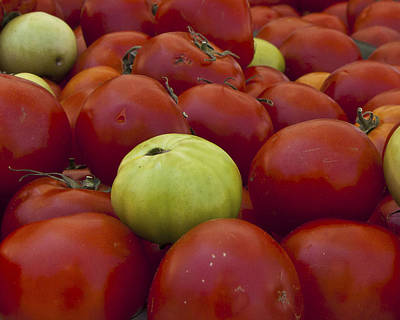 Tomatoe Wall Art - Photograph - Red And Green Tomatoes by Forest Alan Lee