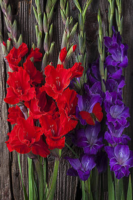 Red Gladiolus Photograph - Red And Purple Gladiolus  by Garry Gay