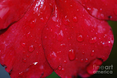Red And Wet Art Print by Paul Ward