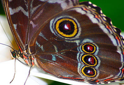 Photograph - Red And Yellow Eyes by Scott Hovind