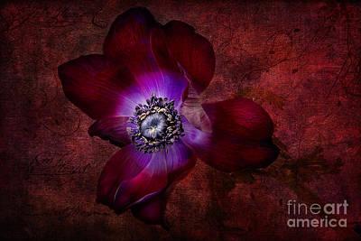 Purple Flowers Digital Art - Red Anemone by Ann Garrett