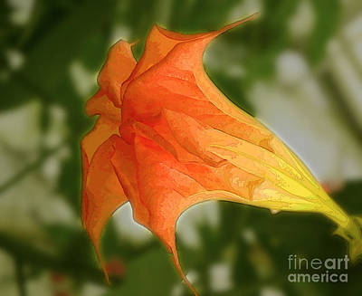 Red Angels Trumpet Flower Art Print