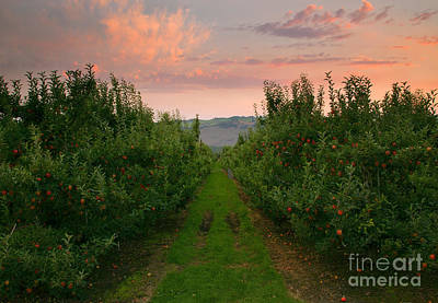 Red Apple Sunset Art Print by Mike  Dawson