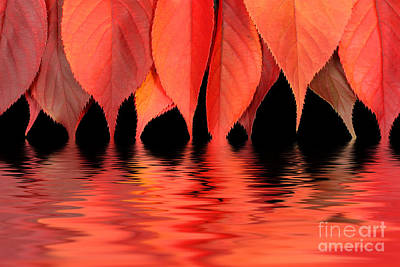 Red Autumn Leaves In Water Print by Simon Bratt Photography LRPS