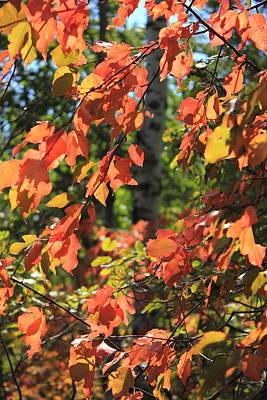 Red Autumn Leaves Art Print by Jim Sauchyn