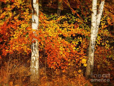 Autumn Leaf Photograph - Red Autumn by Lutz Baar