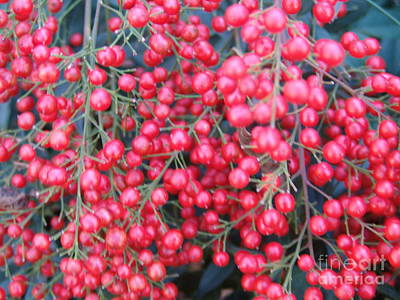 Photograph - Red Berries 2 by Rod Ismay