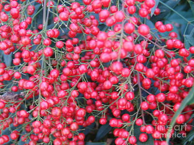 Photograph - Red Berries 3 by Rod Ismay