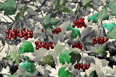 Photograph - Red Berries by James Steele