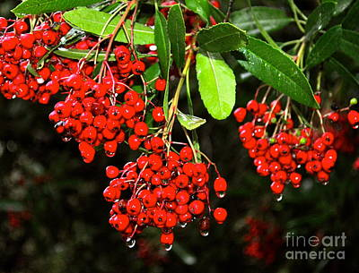 Photograph - Red Berries by Johanne Peale