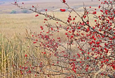 Red Berries Original by Nataly Kryzhanovska