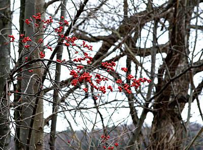 Photograph - Red Berries White Sky by Lorraine Devon Wilke