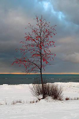 Photograph - Red Berry Tree by Cyryn Fyrcyd