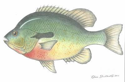 Red Breasted Fish Original