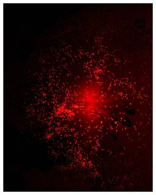 Photograph - Red Burst by Frank Wickham