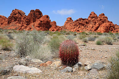 Photograph - Red Cactus In Valley Of Fire by Pierre Leclerc Photography
