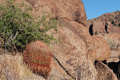 Photograph - Red Cactus Rock by Lorraine Devon Wilke