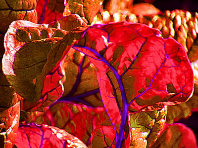 Red Chard Art Print by Rory Sagner
