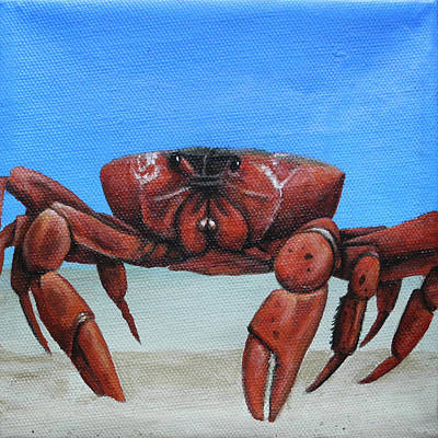Painting - Red Crab by Cindy D Chinn
