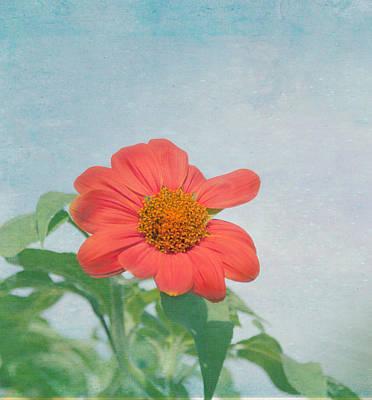 Red Daisy Flower Art Print by Kim Hojnacki