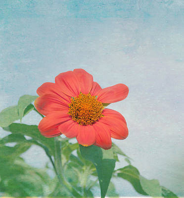 Y120831 Photograph - Red Daisy Flower by Kim Hojnacki