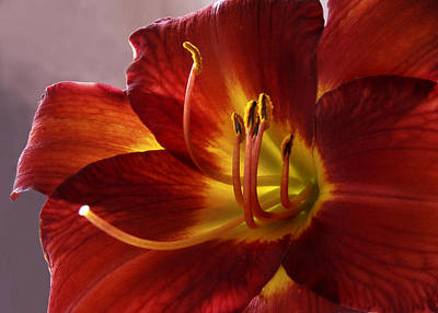 Photograph - Red Day Lily by Nancy Griswold
