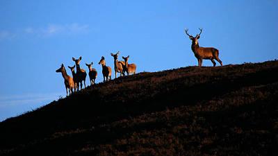 Photograph - Red Deer Group by Gavin Macrae