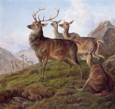 Rack Painting - Red Deer In A Highland Landscape by Charles Jones