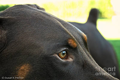 Photograph - Red Dobe by Susan Herber