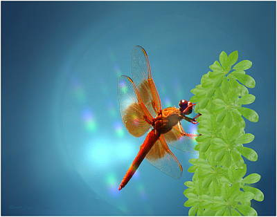 Photograph - Red Dragonfly On Umbrella Plant by Joyce Dickens