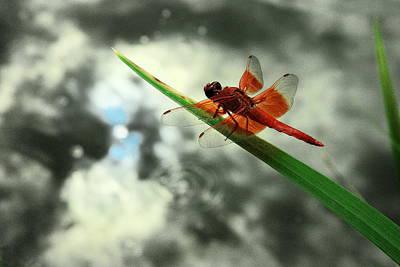 Red Dragonfly Print by Viktor Savchenko