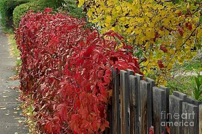 Photograph - Red Fence by Dorrene BrownButterfield