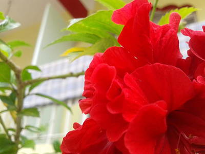 Red Flower Art Print by Chetan Ranjan