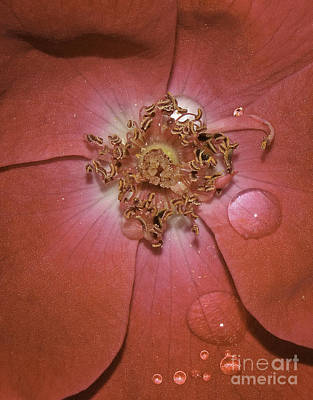 Photograph - Red Flower  by David Waldrop