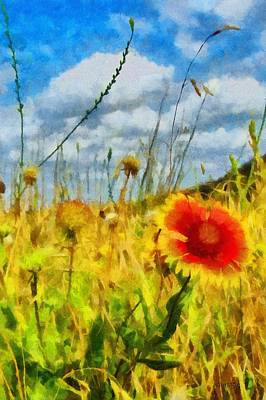 Red Flower In The Field Art Print by Jeff Kolker