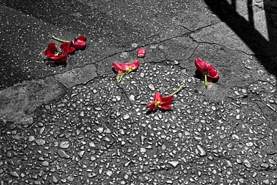 Photograph - Red Flower On Street by Bennie Reynolds