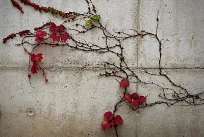 Photograph - Red Flowered Vine by Lorraine Devon Wilke