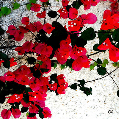 Carol Arnold Wall Art - Photograph - Red Flowers by Carol Arnold