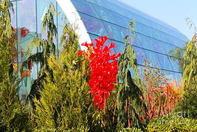 Photograph - Red Glass Tree by Pamela Walrath