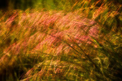 Red Abstract Photograph - Red Grasses by Rich Franco