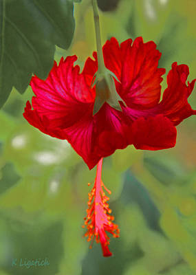 Digital Art - Red Hibiscus by Kerri Ligatich