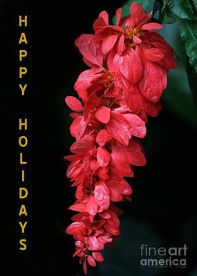 Photograph - Red Holiday Greeting Card by Sabrina L Ryan