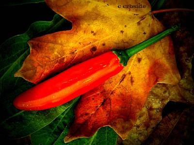 Red Hot Chili Pepper Art Print by Chris Berry